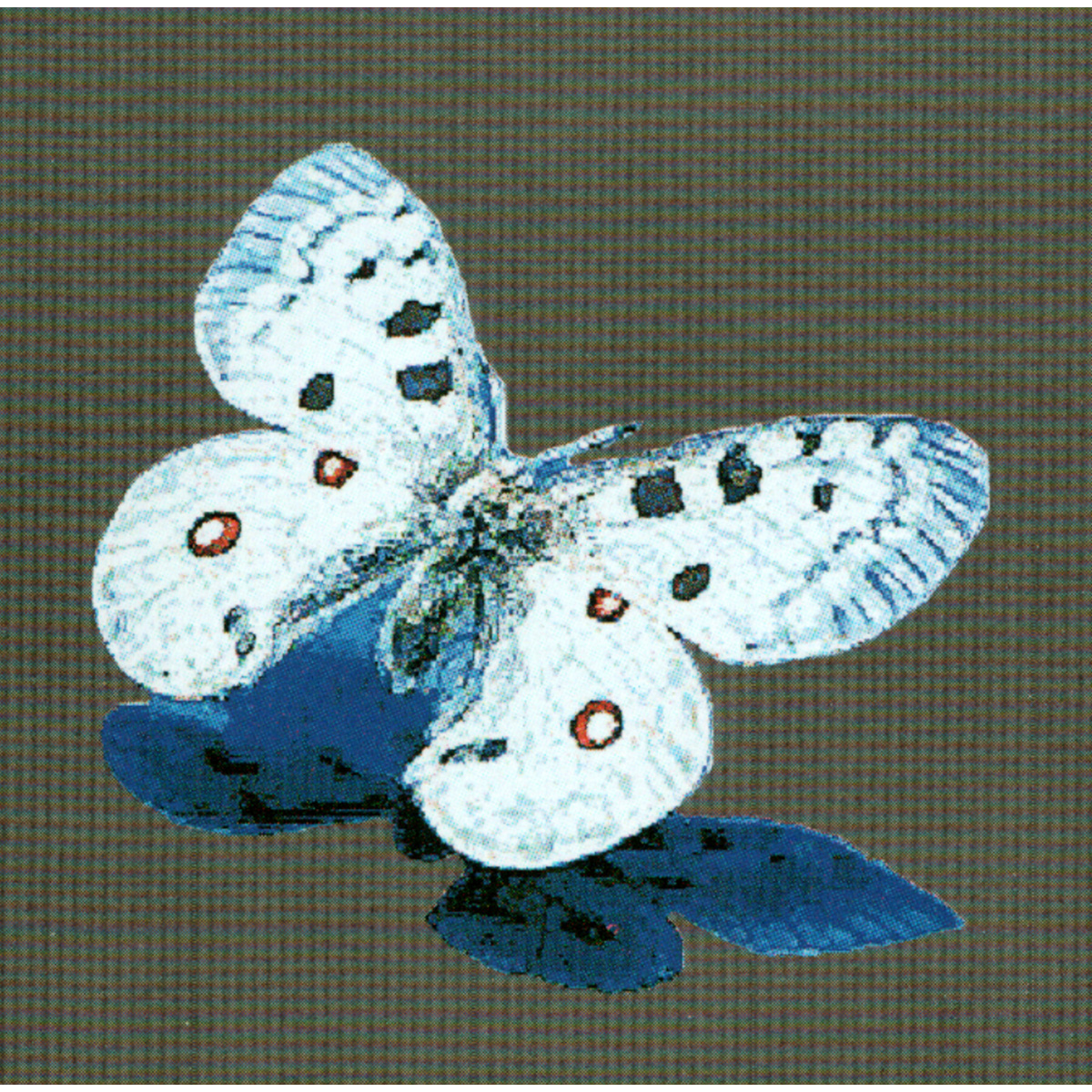 Butterfly Glass Mosaic Pool Murals