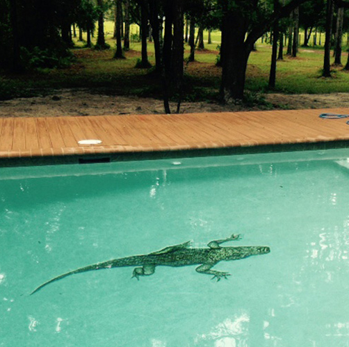 Alligator Glass Swimming Pool Murals
